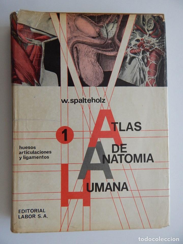 atlas de anatomía humana tomo primero: huesos, - Comprar Libros de ...