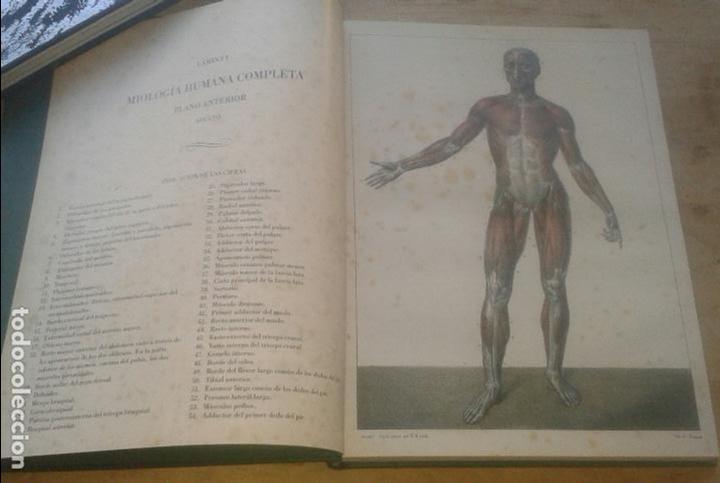 Libros de segunda mano: DOCTOR [JEAN MARC] BOURGERY - TRATADO LA ANATOMÍA DEL HOMBRE. ANATOMÍA DESCRIPTIVA. MIOLOGÍA - Foto 2 - 101200387