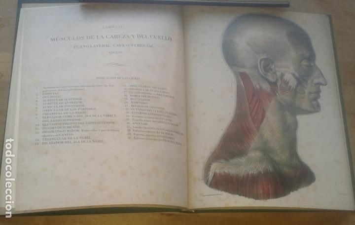 Libros de segunda mano: DOCTOR [JEAN MARC] BOURGERY - TRATADO LA ANATOMÍA DEL HOMBRE. ANATOMÍA DESCRIPTIVA. MIOLOGÍA - Foto 3 - 101200387