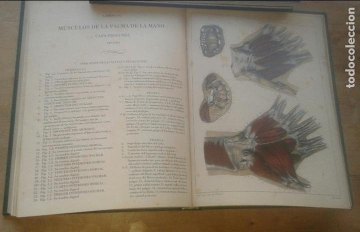 Libros de segunda mano: DOCTOR [JEAN MARC] BOURGERY - TRATADO LA ANATOMÍA DEL HOMBRE. ANATOMÍA DESCRIPTIVA. MIOLOGÍA - Foto 4 - 101200387