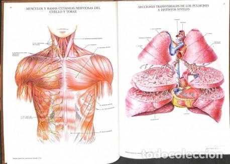 láminas de anatomía (cabeza, torax, abdomen y e - Comprar Libros de ...