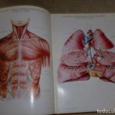 Libros de segunda mano: LÁMINAS DE ANATOMÍA - LABORATORIOS ALMIRALL, S.A. - GRAN FORMATO. Lote 107026103