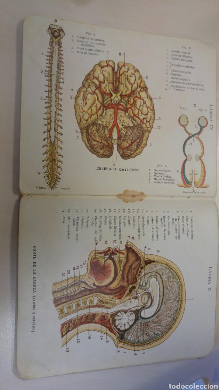 atlas de anatomía y fisiología humanas dr. leli - Comprar Libros de ...