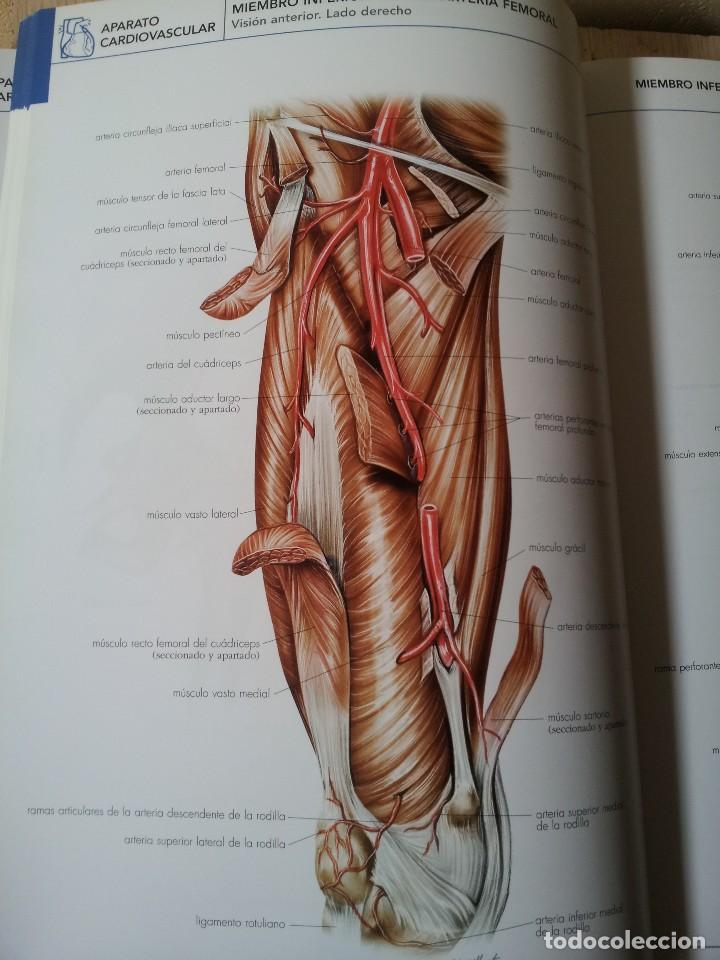 atlas de anatomia humana - ars medica 2009 - co - Comprar Libros de ...