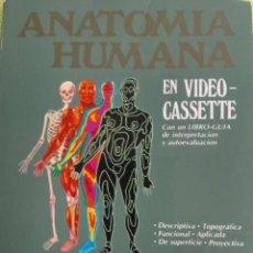 Libros de segunda mano: ANATOMÍA HUMANA VIDEO VHS CONTOMO ILUSTRADO - TÓRAX, PAREDES DEL ABDOMEN Y PELVIS . Lote 120537795