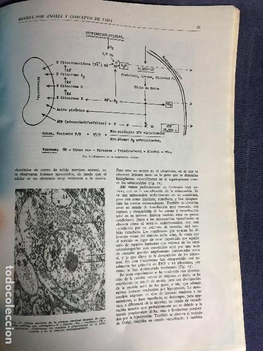 Libros de segunda mano: 4 BOLETIN CULTURAL E INFORMATIVO CONSEJO GENERAL DE COLEGIOS MEDICOS DE ESPAÑA ENE FEB 1963 - Foto 11 - 121103027