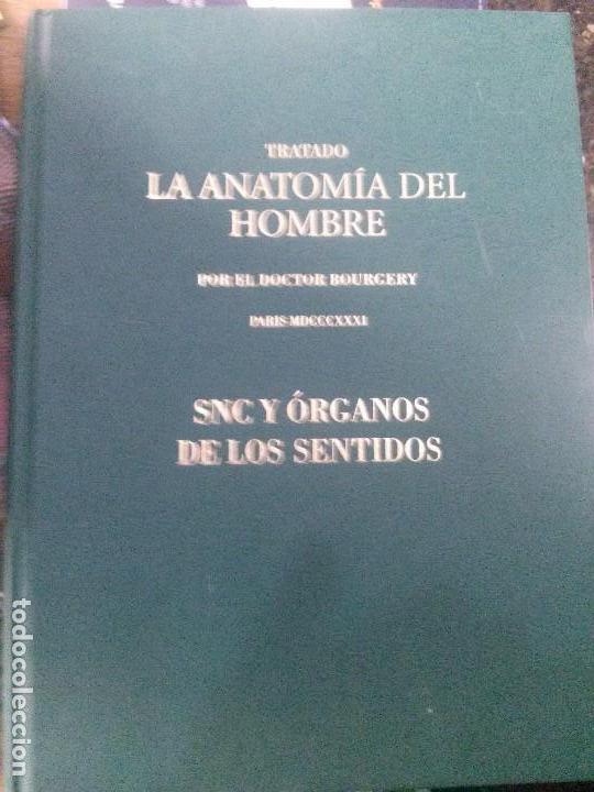 TRATADO LA ANATOMIA DEL HOMBRE ,SNC Y ORGANOS DE LOS SENTIDOS , DOCTOR BOURGERY (Libros de Segunda Mano - Ciencias, Manuales y Oficios - Medicina, Farmacia y Salud)
