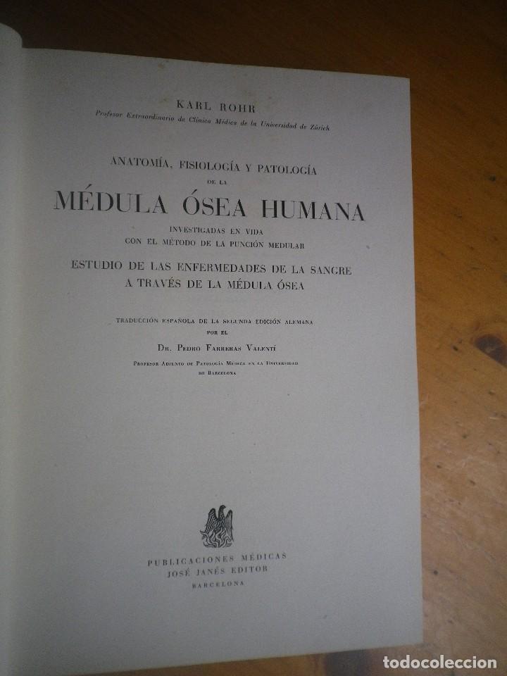 anatomía, fisiología y patología medula osea hu - Comprar Libros de ...