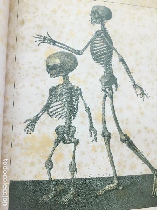 Libros de segunda mano: TRATADO DE LA ANATOMÍA DEL HOMBRE.ANATOMÍA DESCRIPTIVA Y FISIOLÓGICA (HUESOS).2006 DOCTOR BOURGERY - Foto 4 - 132015542