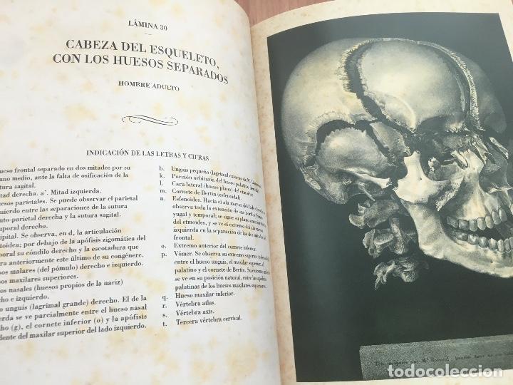 Libros de segunda mano: TRATADO DE LA ANATOMÍA DEL HOMBRE.ANATOMÍA DESCRIPTIVA Y FISIOLÓGICA (HUESOS).2006 DOCTOR BOURGERY - Foto 5 - 132015542