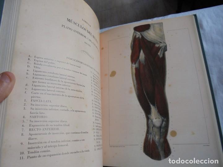 Libros de segunda mano: TRATADO LA ANATOMIA DEL HOMBRE MIOLOGIA.POR EL DOCTOR BOURGERY.ANATOMIA DESCRIPTIVA Y FISIOLOGIA.183 - Foto 7 - 132029082
