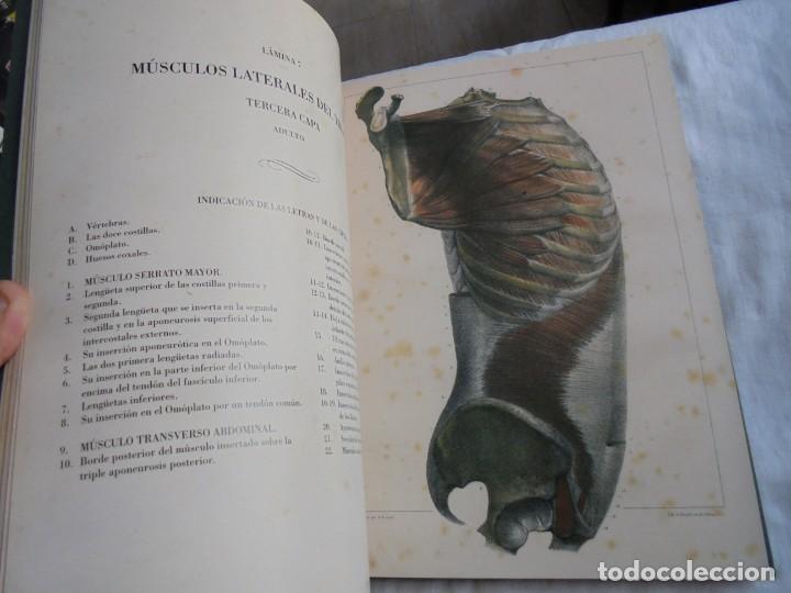 Libros de segunda mano: TRATADO LA ANATOMIA DEL HOMBRE MIOLOGIA.POR EL DOCTOR BOURGERY.ANATOMIA DESCRIPTIVA Y FISIOLOGIA.183 - Foto 10 - 132029082