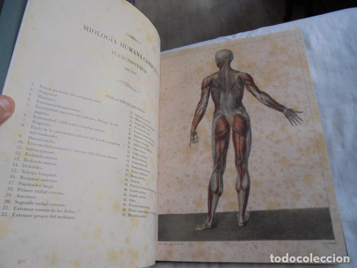 Libros de segunda mano: TRATADO LA ANATOMIA DEL HOMBRE MIOLOGIA.POR EL DOCTOR BOURGERY.ANATOMIA DESCRIPTIVA Y FISIOLOGIA.183 - Foto 11 - 132029082
