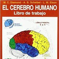 Libros de segunda mano: EL CEREBRO HUMANO-LIBRO DE TRABAJO - M. C. DIAMOND; ARNOLD B. SCHEIBEL Y L.M. MELSON. Lote 203928720
