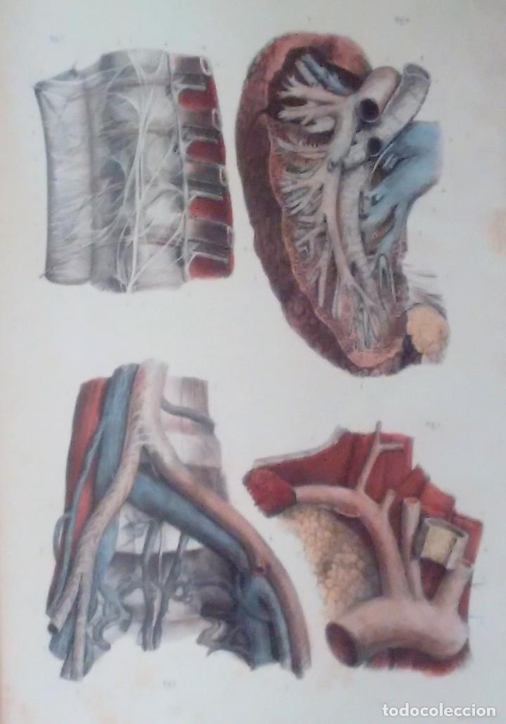 Libros de segunda mano: Tratado ANATOMÍA SER HUMANO (SNC. Órganos Sentidos) Dr. Bourgery. Facsimil. Ergon 2004. IMPECABLE. - Foto 2 - 140057438