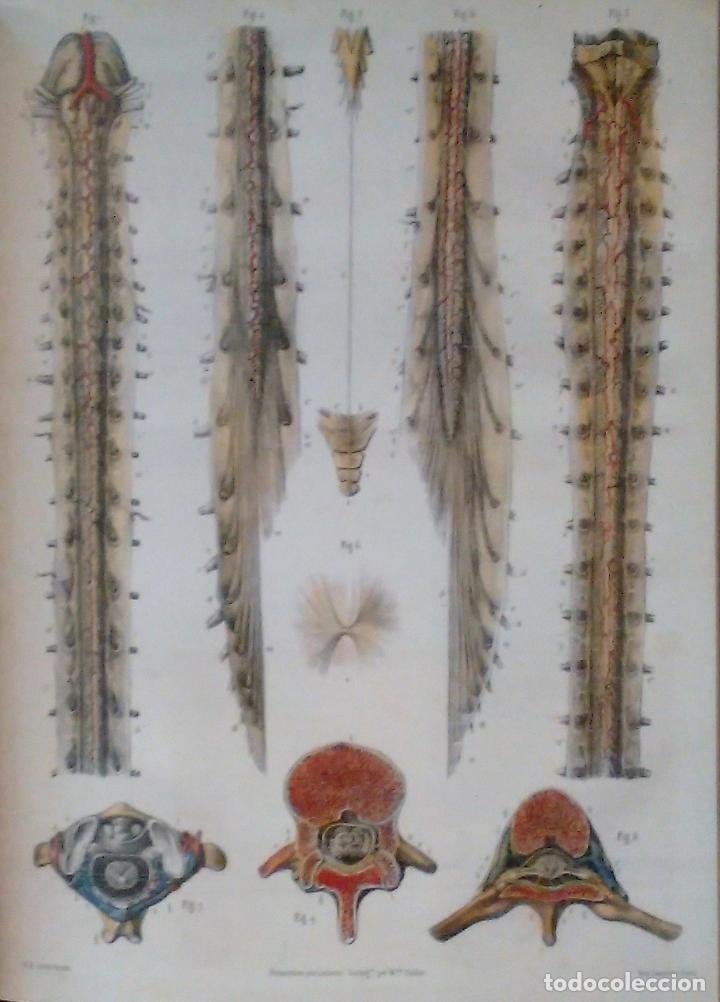 Libros de segunda mano: Tratado ANATOMÍA SER HUMANO (SNC. Órganos Sentidos) Dr. Bourgery. Facsimil. Ergon 2004. IMPECABLE. - Foto 4 - 140057438