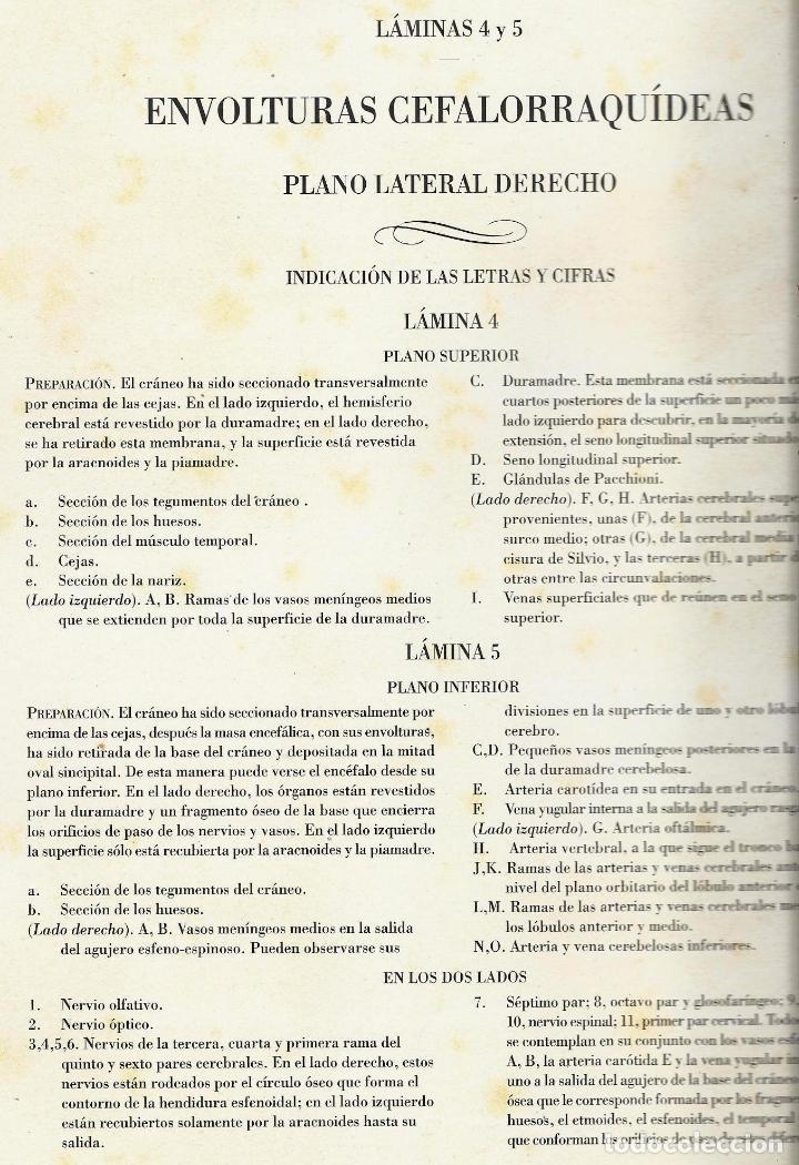 Libros de segunda mano: Tratado ANATOMÍA SER HUMANO (SNC. Órganos Sentidos) Dr. Bourgery. Facsimil. Ergon 2004. IMPECABLE. - Foto 6 - 140057438