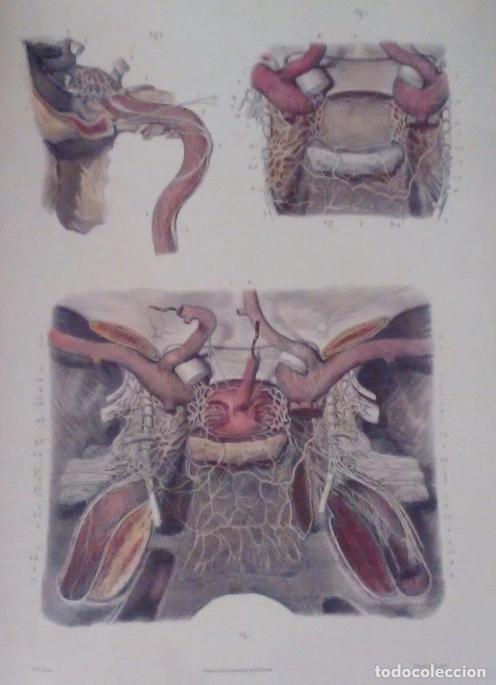 Libros de segunda mano: Tratado ANATOMÍA SER HUMANO (SNC. Órganos Sentidos) Dr. Bourgery. Facsimil. Ergon 2004. IMPECABLE. - Foto 7 - 140057438
