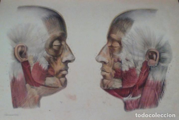 Libros de segunda mano: Tratado ANATOMÍA SER HUMANO (SNC. Órganos Sentidos) Dr. Bourgery. Facsimil. Ergon 2004. IMPECABLE. - Foto 9 - 140057438