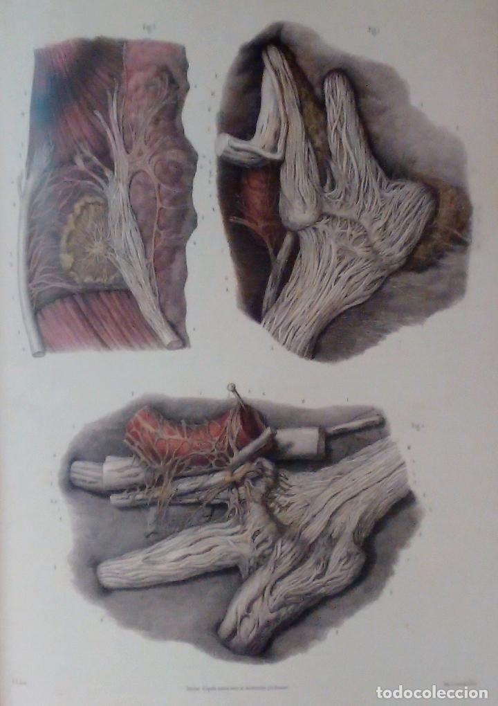 Libros de segunda mano: Tratado ANATOMÍA SER HUMANO (SNC. Órganos Sentidos) Dr. Bourgery. Facsimil. Ergon 2004. IMPECABLE. - Foto 10 - 140057438