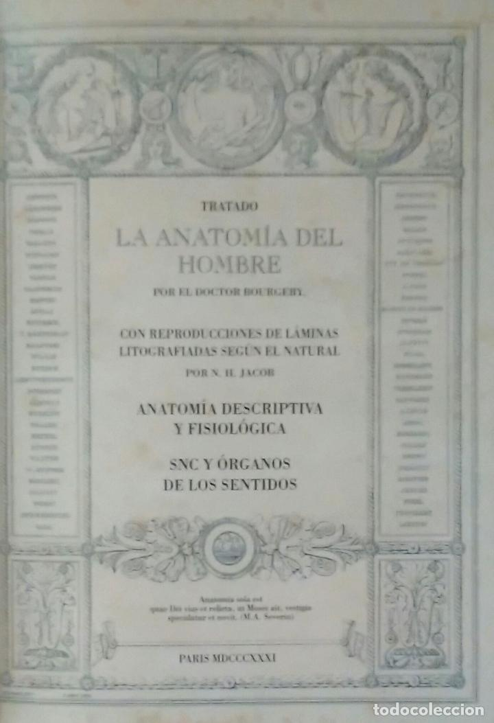 Libros de segunda mano: Tratado ANATOMÍA SER HUMANO (SNC. Órganos Sentidos) Dr. Bourgery. Facsimil. Ergon 2004. IMPECABLE. - Foto 11 - 140057438