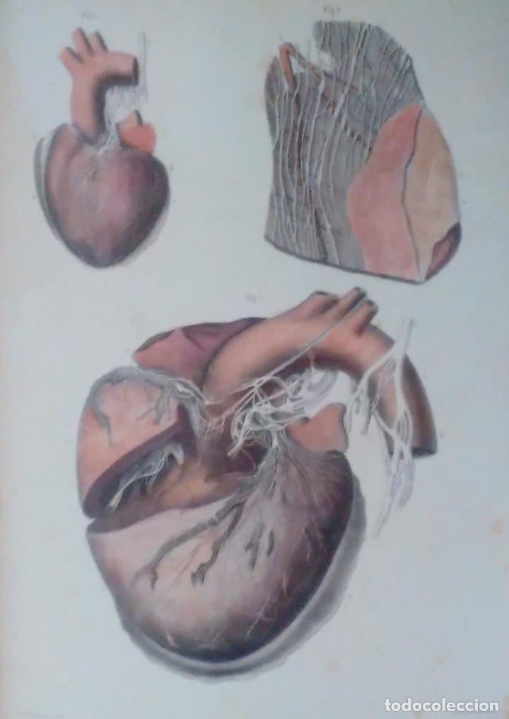 Libros de segunda mano: Tratado ANATOMÍA SER HUMANO (SNC. Órganos Sentidos) Dr. Bourgery. Facsimil. Ergon 2004. IMPECABLE. - Foto 12 - 140057438