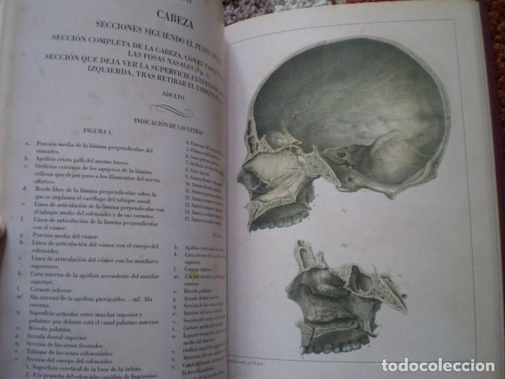 Libros de segunda mano: TRATADO ANATOMIA HOMBRE. DOCTOR BOURGERY PARIS 1831. FACSIMIL. HUESOS - Foto 6 - 144340902