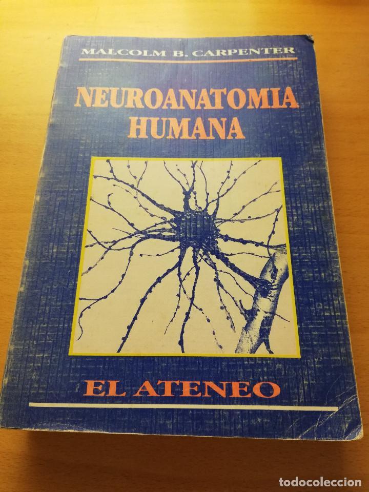 neuroanatomia humana