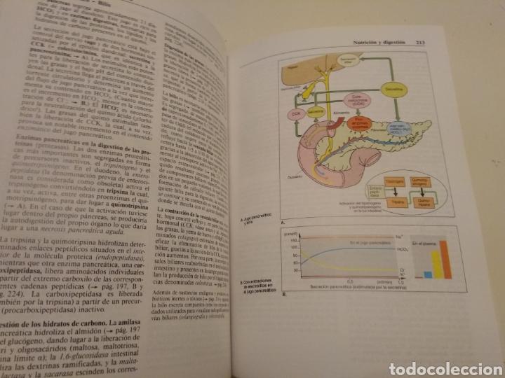 Libros de segunda mano: TEXTO Y ATLAS DE FISIOLOGÍA AGAMEMNON DESPOPOULOS STEFAN SILBERNAGL MOSBY DOYMA LIBROS 1996 - Foto 8 - 149544740
