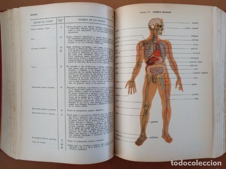 Libros de segunda mano: DICCIONARIO MEDICO DICCIONARIOS TEIDE BARCELONA 1960 ILUSTRADO - Foto 6 - 151786650