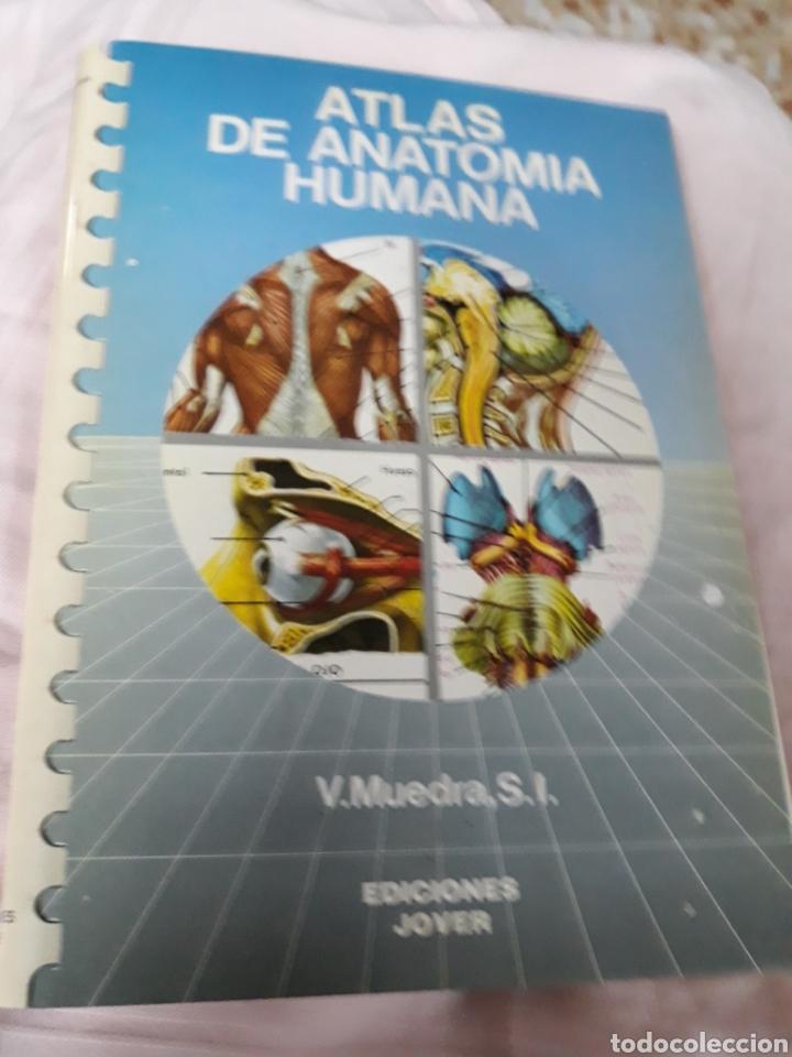 Libros de segunda mano: Libro: Colección ATLAS DE ANATOMÍA HUMANA.-EDICIONES JOVER.- AÑO 1989 - Foto 2 - 153529788