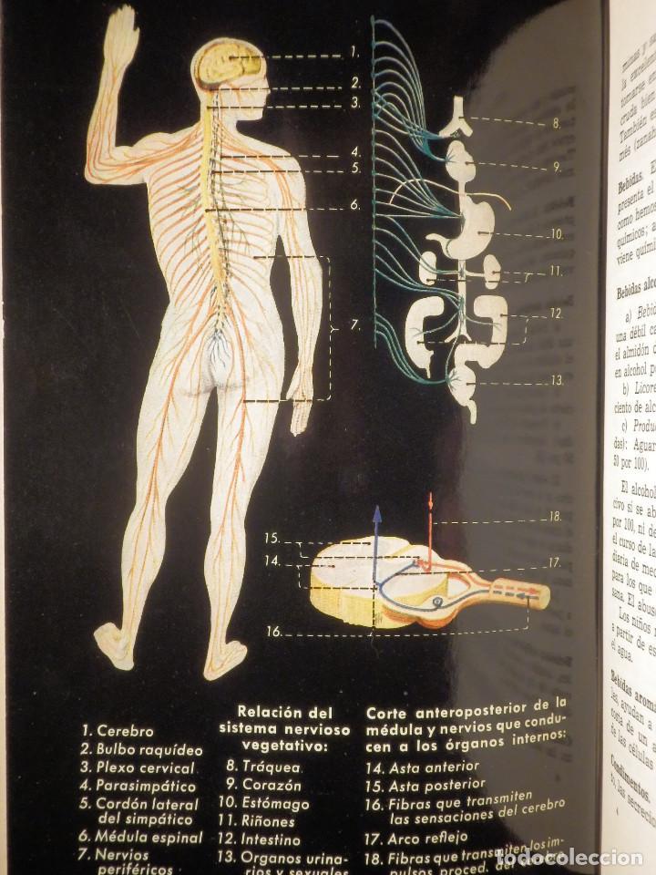 Libros de segunda mano: Tu cuerpo y tu salud - F. Goust - Ediciones Daymon - 1958 - Con decenas de láminas - Foto 8 - 162988618