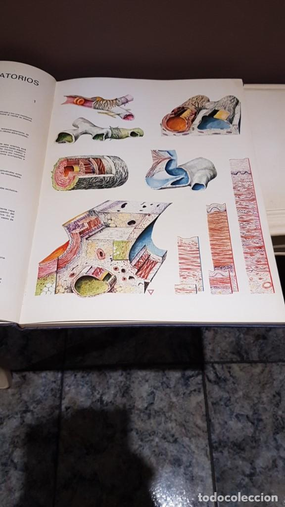 Libros de segunda mano: ATLAS DE HISTOLOGÍA PLÁSTICA, ROMAN HIPPÉLI, FHER, BARCELONA 1967, 24 LÁMINAS, 32 POR 40CM - Foto 2 - 164852710