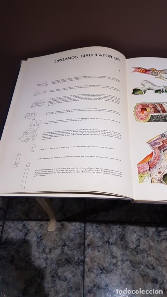 Libros de segunda mano: ATLAS DE HISTOLOGÍA PLÁSTICA, ROMAN HIPPÉLI, FHER, BARCELONA 1967, 24 LÁMINAS, 32 POR 40CM - Foto 3 - 164852710