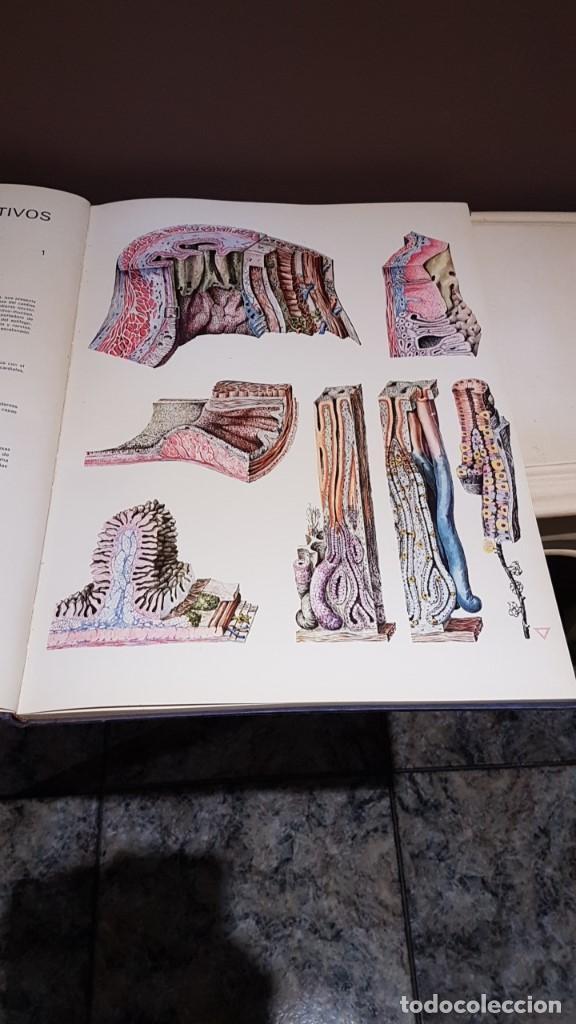 Libros de segunda mano: ATLAS DE HISTOLOGÍA PLÁSTICA, ROMAN HIPPÉLI, FHER, BARCELONA 1967, 24 LÁMINAS, 32 POR 40CM - Foto 5 - 164852710