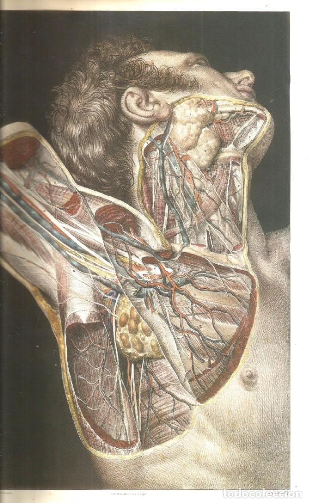 Libros de segunda mano: Tratado La anatomía del hombre: Cirugía Operatoria. Doctor Bourgery - Foto 2 - 172164349