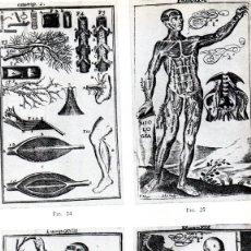 Libros de segunda mano: LIBRO ANATOMIA ESPAÑOLA EN LA ILUSTRACION,1963,CATEDRATICO LUIS S. GRANJEL,FIRMADO,MEDICINA,FARMACIA. Lote 173795052