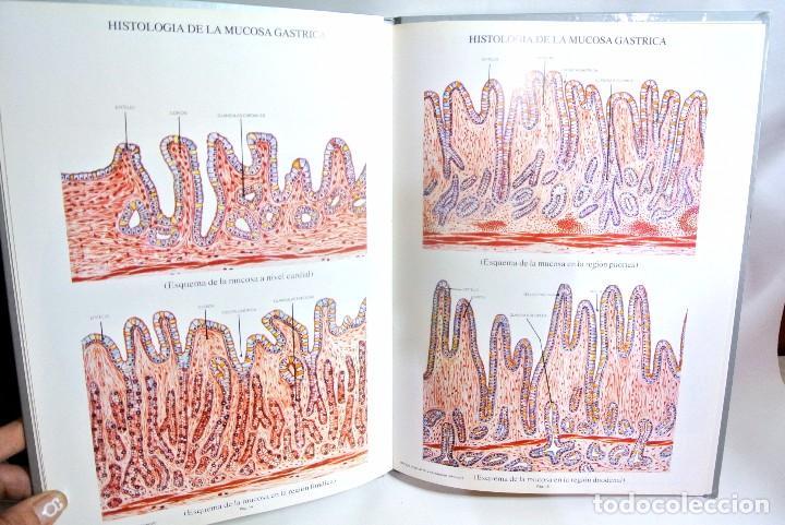 Libros de segunda mano: Libro LAMINAS DE ANATOMIA Aparato Digestivo, OMEGA FARMACEUTICA - Foto 3 - 186020600