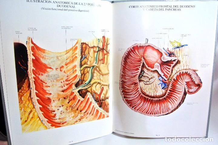 Libros de segunda mano: Libro LAMINAS DE ANATOMIA Aparato Digestivo, OMEGA FARMACEUTICA - Foto 4 - 186020600
