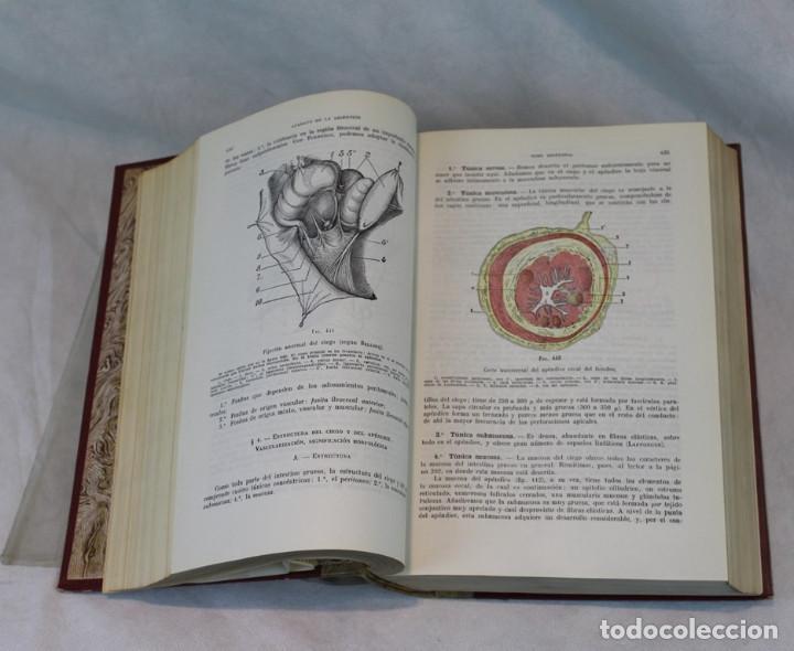 Libros de segunda mano: Cinco tomos antiguos de anatomía,encuadernados en piel y cartoné, Gómez Oliveros y Testut. - Foto 11 - 208919425