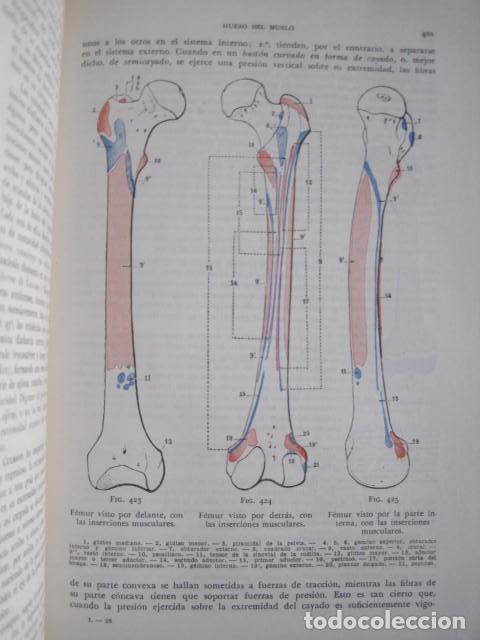 Libros de segunda mano: L. TESTUT, A. LATARJET. ANATOMÍA HUMANA. SALVAT. 4 TOMOS. PREMIO SAINTOUR. ILUSTRAN G. DEVY Y DUPRET - Foto 24 - 213995663