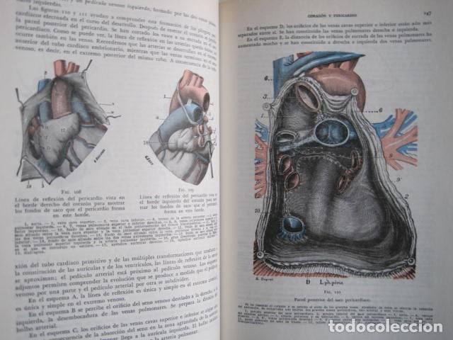 Libros de segunda mano: L. TESTUT, A. LATARJET. ANATOMÍA HUMANA. SALVAT. 4 TOMOS. PREMIO SAINTOUR. ILUSTRAN G. DEVY Y DUPRET - Foto 48 - 213995663