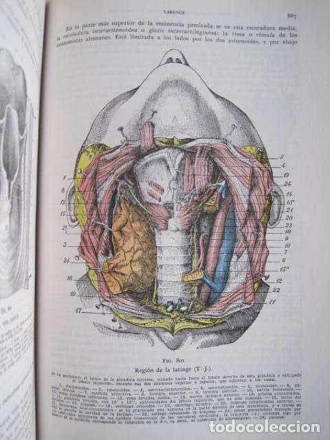 Libros de segunda mano: L. TESTUT, A. LATARJET. ANATOMÍA HUMANA. SALVAT. 4 TOMOS. PREMIO SAINTOUR. ILUSTRAN G. DEVY Y DUPRET - Foto 72 - 213995663