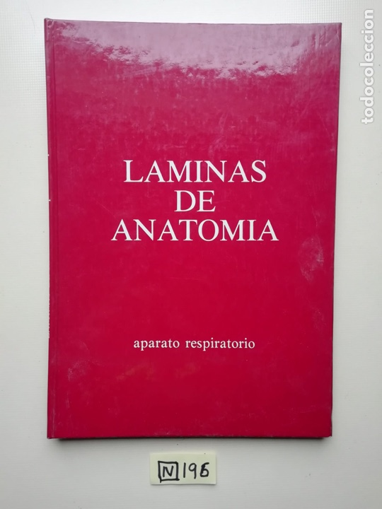 LÁMINAS DE ANATOMÍA (Libros de Segunda Mano - Ciencias, Manuales y Oficios - Medicina, Farmacia y Salud)