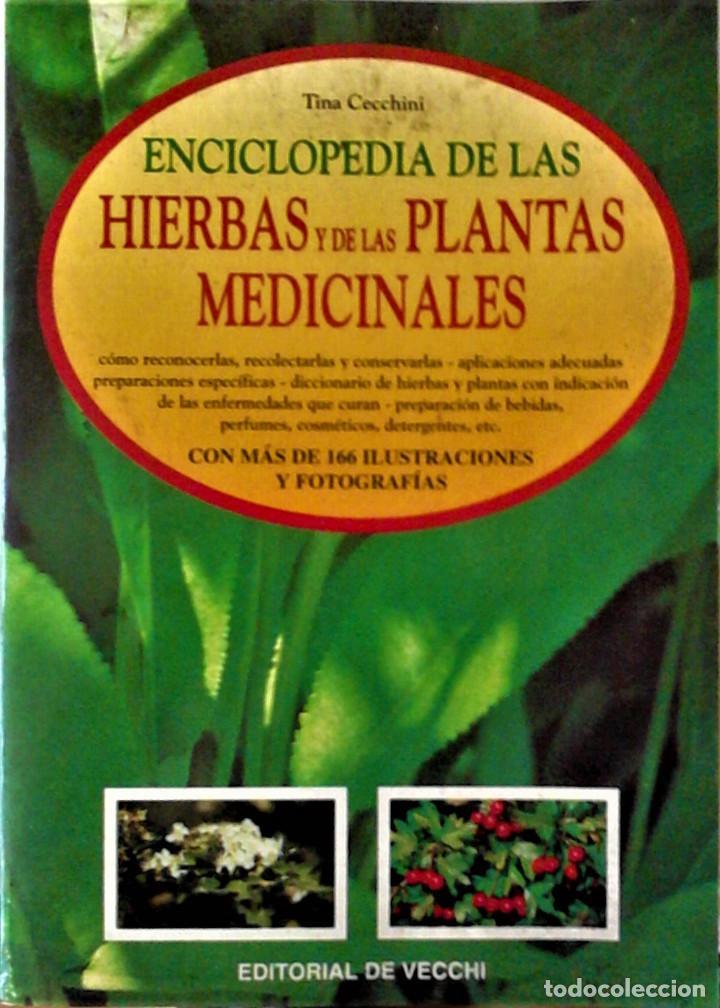 TINA CECCHINI - ENCICLOPEDIA DE LAS HIERBAS Y LAS PLANTAS MEDICINALES (Libros de Segunda Mano - Ciencias, Manuales y Oficios - Medicina, Farmacia y Salud)