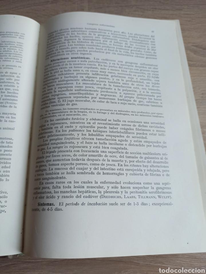 Libros de segunda mano: Patología y Terapéutica Especiales de los Animales Domesticos Tomo Primero Editorial Labor 1947 - Foto 10 - 244716700