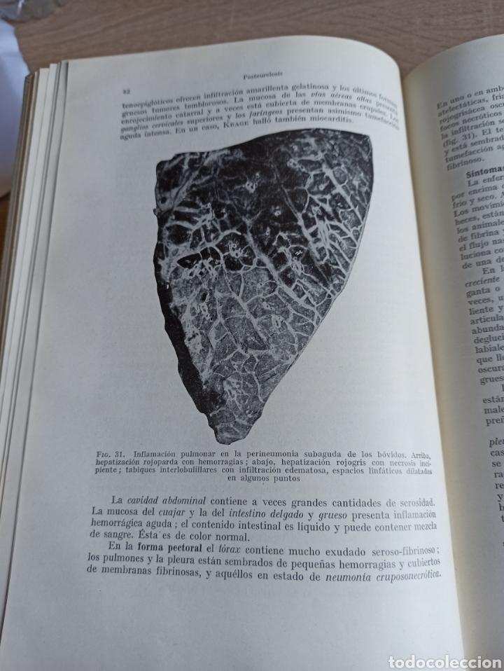 Libros de segunda mano: Patología y Terapéutica Especiales de los Animales Domesticos Tomo Primero Editorial Labor 1947 - Foto 11 - 244716700