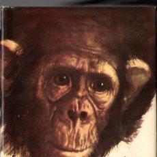 Libros de segunda mano: RENÉ GUILLOT : OUORO EL CHIMPANCÉ (ANIMALES Y SELVA MOLINO, 1960). Lote 53547604