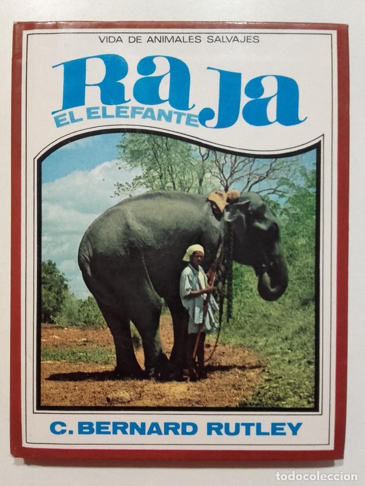 RAJA EL ELEFANTE - VIDA DE ANIMALES SALVAJES Nº 9 - C. BERNARD RUTLEY - ED. MOLINO - 1982 (Libros de Segunda Mano - Literatura Infantil y Juvenil - Novela)