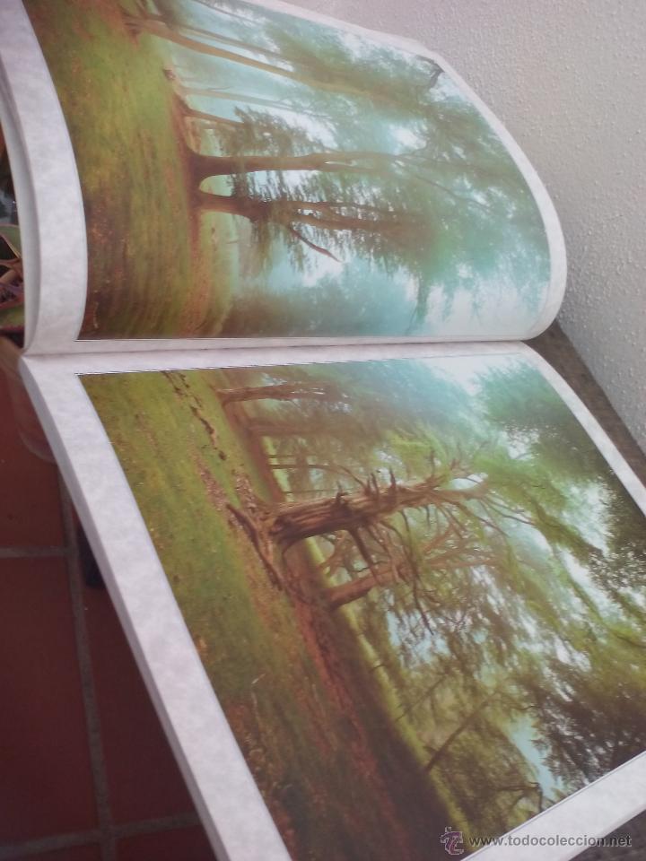 portrait of a forest. richard kraus. magnificas - Comprar en ...